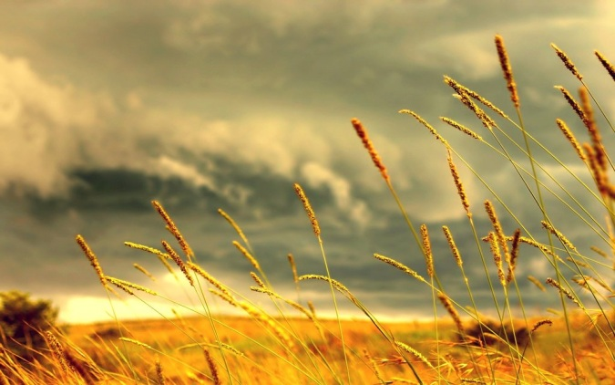 Grass by Jorlin